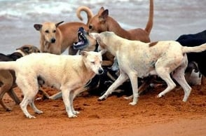 Chennai: Endangered animal killed by stray dogs